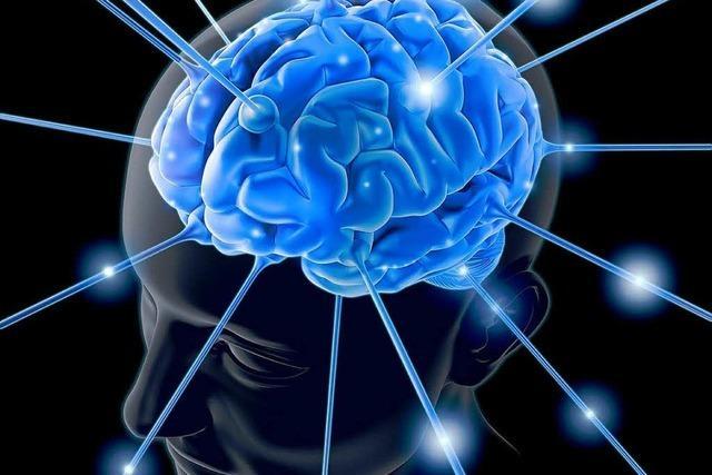 Wissenschaftler und Künstler erforschen das Gehirn