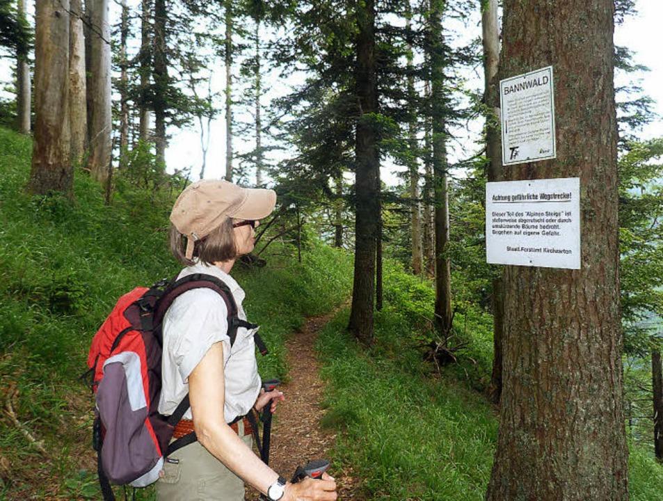 Die Tour durch den Bannwald enthält einige Herausforderungen.  | Foto: Rolf Müller