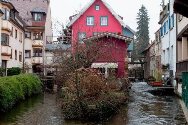 Schlauer werden am Gewerbekanal in Waldkirch