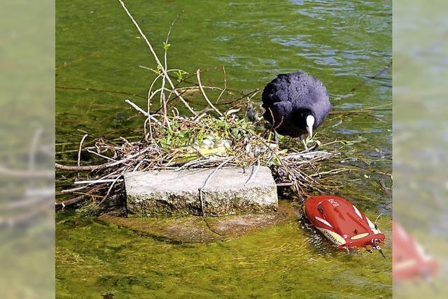 Die Wahrheit liegt im Teich