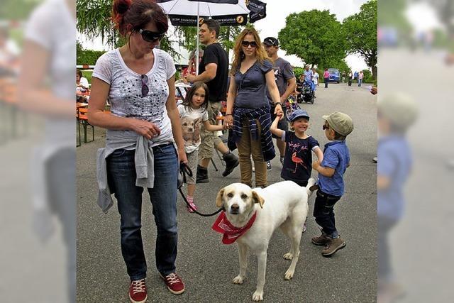 Tausende wandeln auf Gutedelspuren