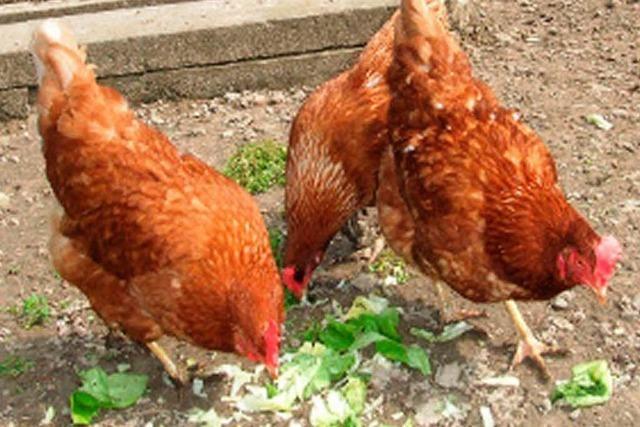 Hühner, Hund und Co.