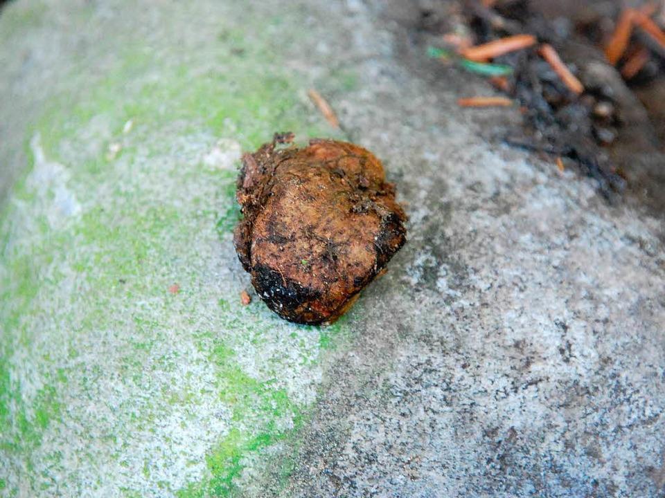 Wahrscheinlich einen Schleimtrüffel, s...hat ein Mann auf dem Neufeld gefunden.  | Foto: Ralf H. Dorweiler