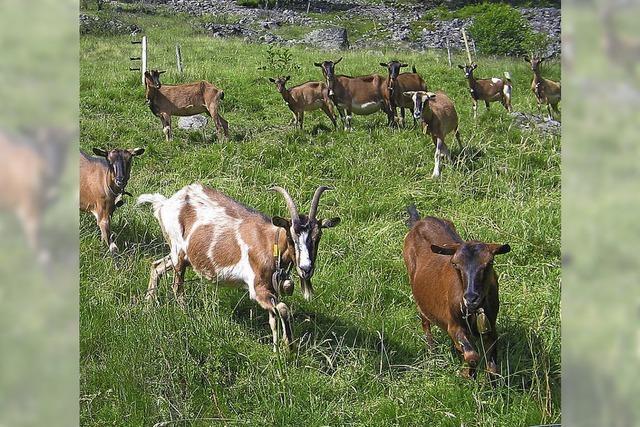Naturpflege mit weniger Ziegen