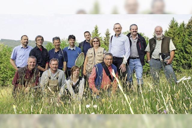 Wiesen und Rinder im Wettstreit