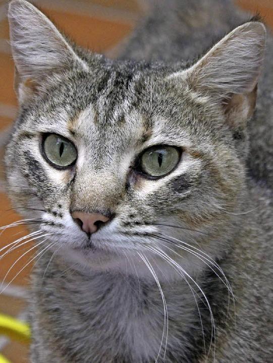 Ein Milchbad braucht sie nicht, aber ein neues Zuhause: Katze Cleopatra.    Foto: Tierheim