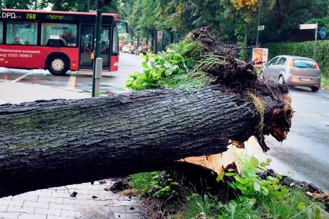 Welche Versicherungen greifen bei Sturmschäden?