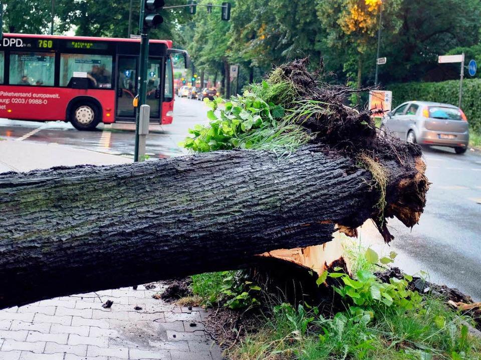 """Die wichtigsten Fragen und Antworten r...Versicherungen bei Sturmschäden""""    Foto: dpa"""