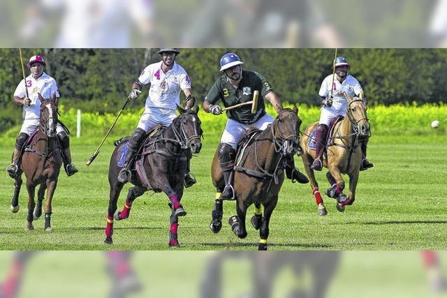 Rasanter Pferdesport