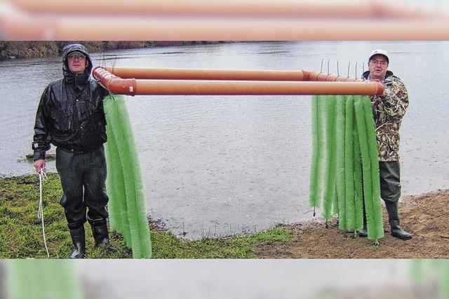 Borstige Kinderstube für Baby-Fische