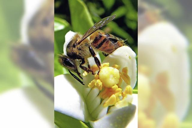 Von fleißigen Bienen und emsigen Imkern