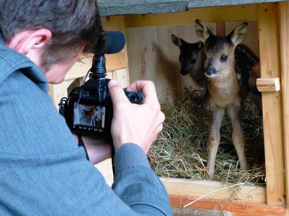 So fotogen: Die Rehkinder in der umfunktionierten Hundehütte  | Foto: Peter Stellmach
