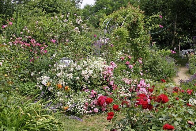 Rosen und Eisenskulpturen