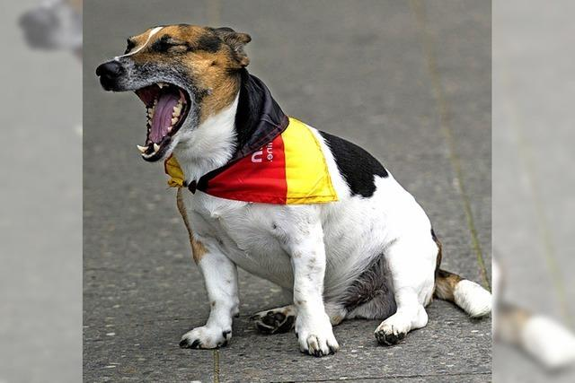 Verein möchte Zuschuss für Hundeplatz