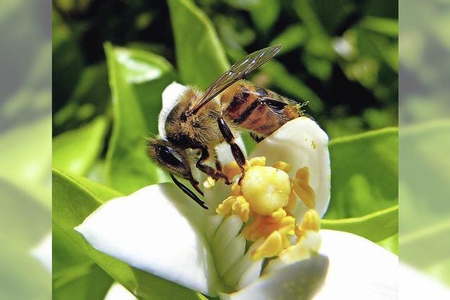 Einblick ins Bienenleben