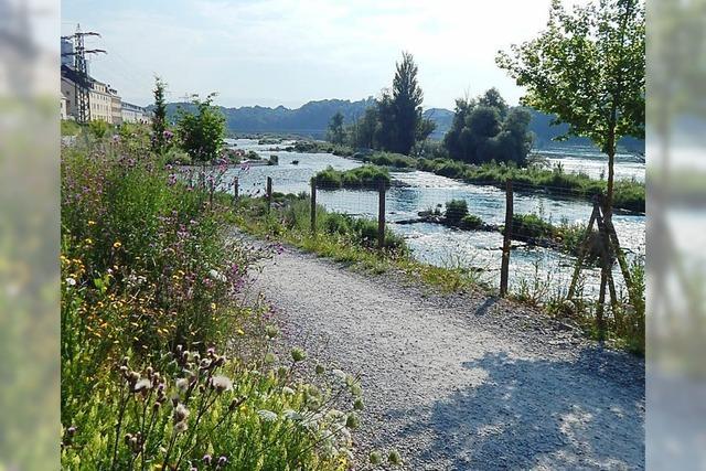 Am Rhein gibt's viel zu erleben