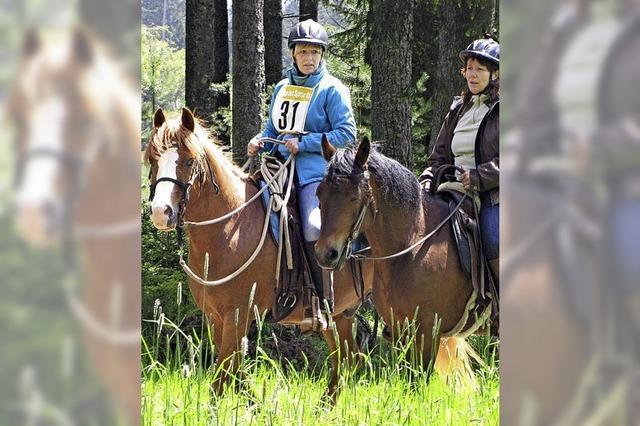 Ein Tag für Pferdefreunde