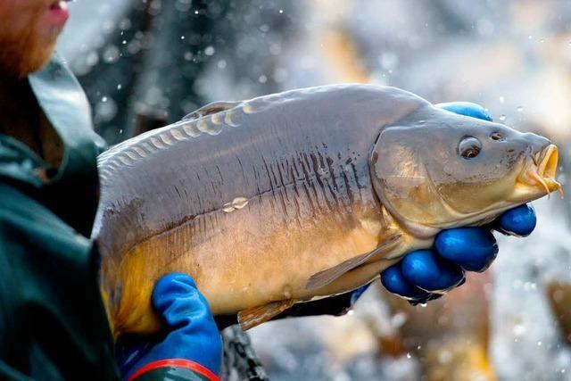 Fische für Fotos missbraucht – Für Staatsanwalt Verstoß gegen Tierschutz