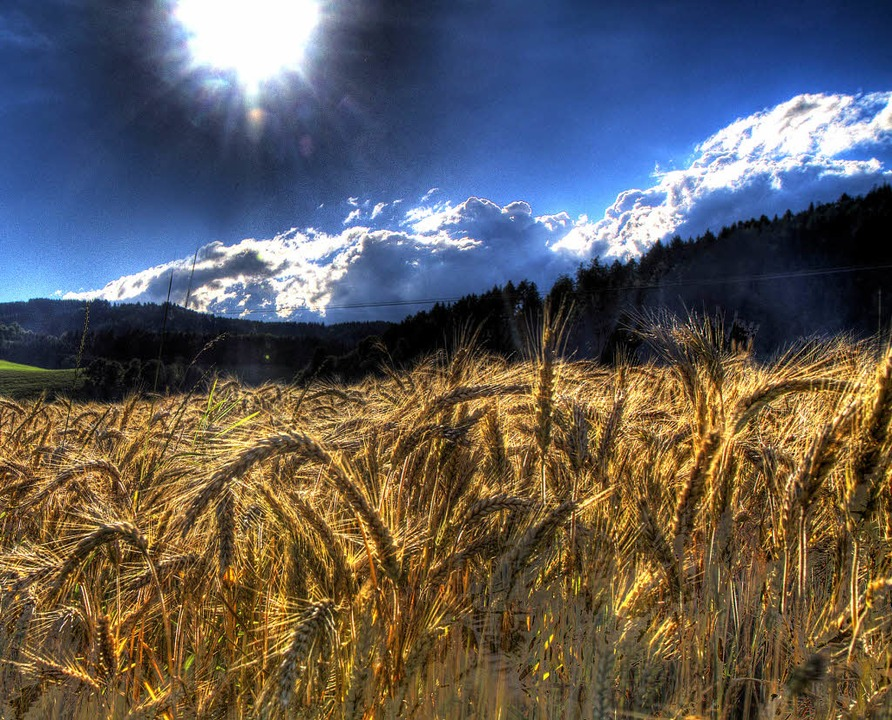 Mit dem Weizen landete etwas auf dem T...ler verursacht Weizen sogar Diabetes.     Foto: Daniel Fleig/dpa