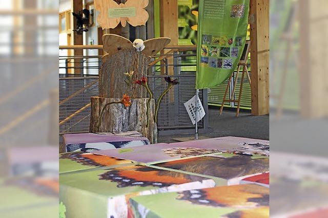 Schmetterlingsausstellungen in Feldberg