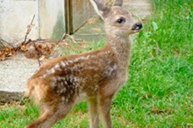 Ein Herz für Bambi