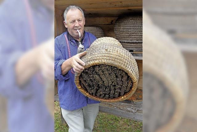 Hochachtung vor Bienen
