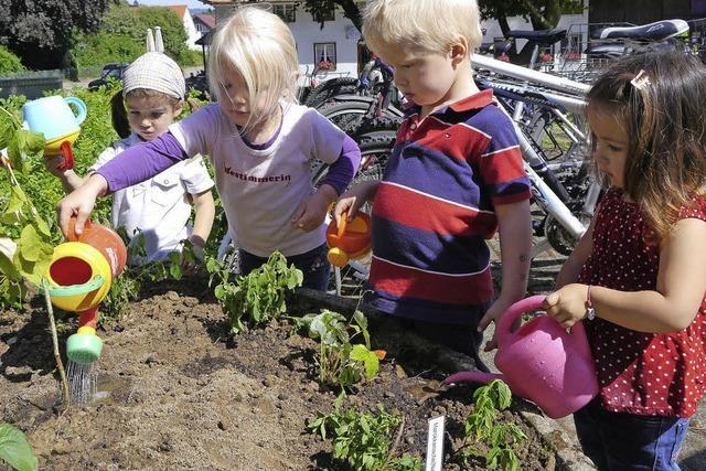 Minigärten statt kahler Scheiben