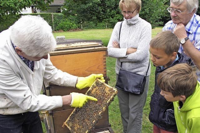 Bienen fliegen bis zu Tempo 30