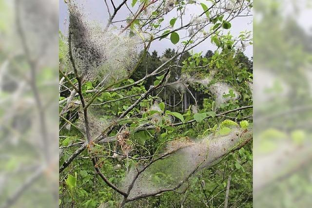 Gespenstisch verschleierte Bäume