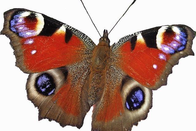 Fotoausstellung zu heimischen Schmetterlingen im Haus der Natur