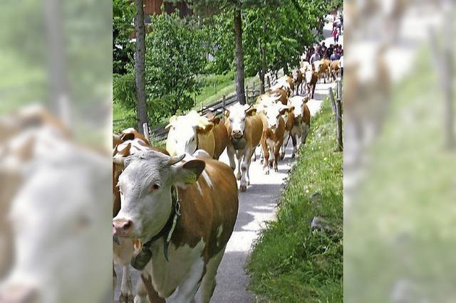 Mehr Geld für Viehwirtschaft auf Bergwiesen