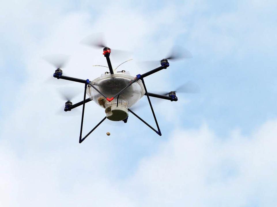 Mit Hightech gegen den Maiszünsler: De...nbucher steuert den fliegenden Helfer.    Foto: Thilo Bergmann