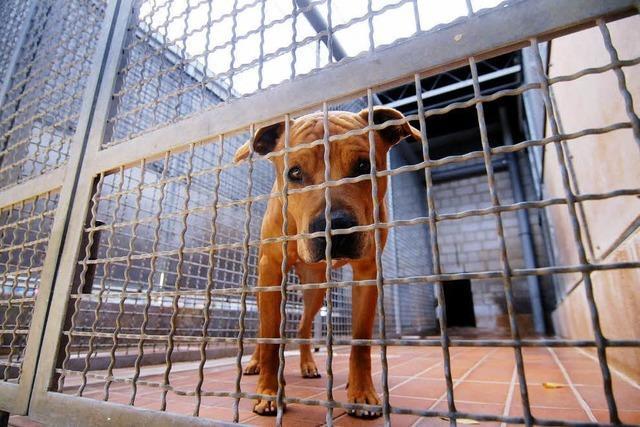 Tierschutzverein Lahr atmet auf