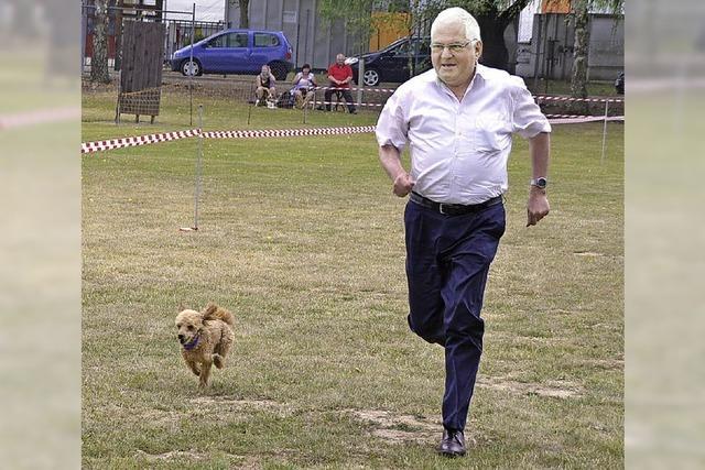 Ein Windhund siegt beim Pudelrennen