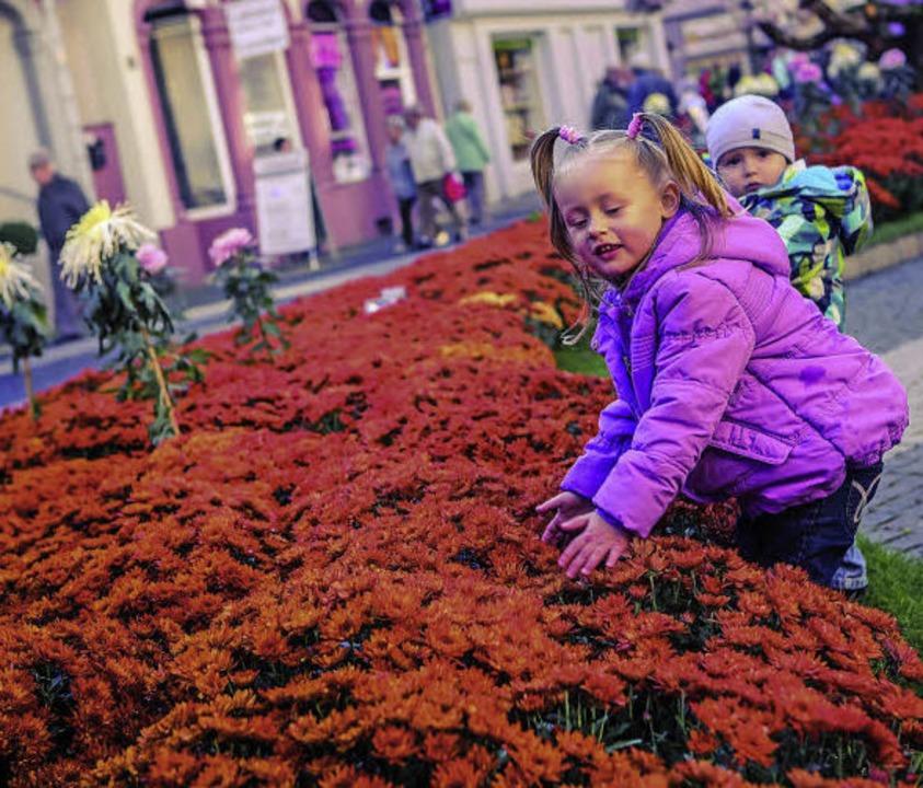 Leidenschaft soll die Chrysanthema wec...ch gelingt das schon bei den Kindern.   | Foto: Stadt Lahr