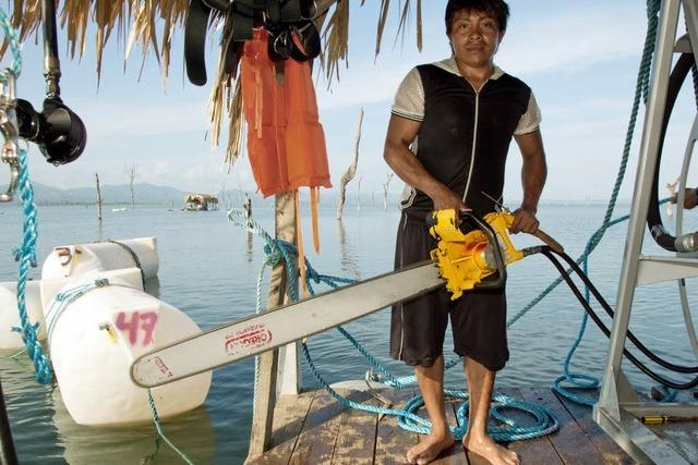 Waldarbeiter unter Wasser: Die Ware Stauseeholz