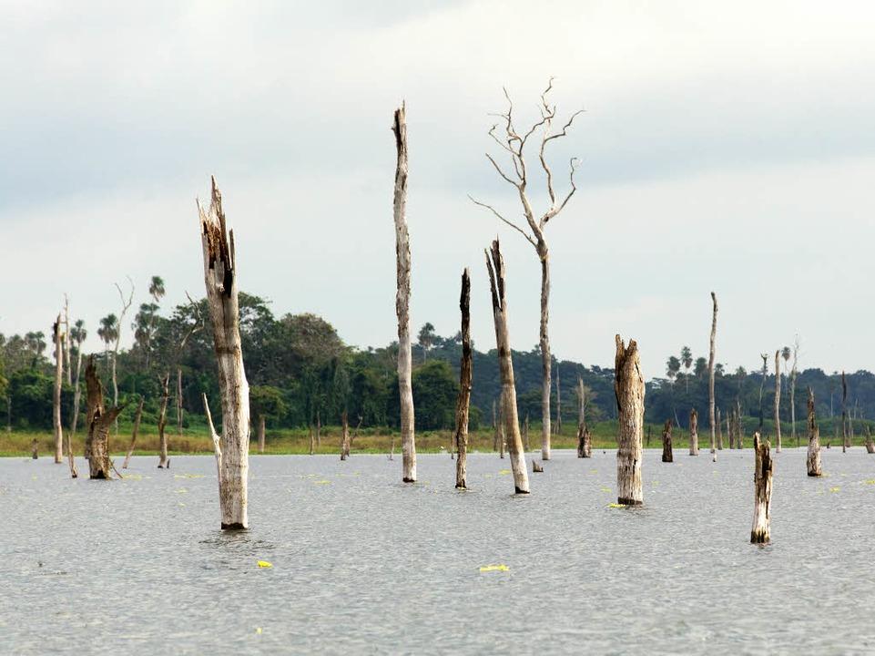 Ertrunken: der ehemalige Wald im Stausee  | Foto: Martin Egbert
