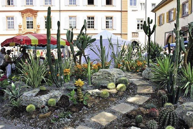 Gartenmesse Diga: Pflanzen und neue Gartentrends