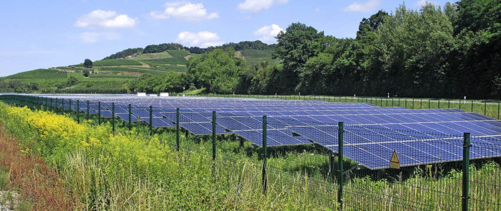Der Solarpark Vogtsburg liegt in einem...tunden profitieren Natur und Anleger.   | Foto: Benjamin Bohn