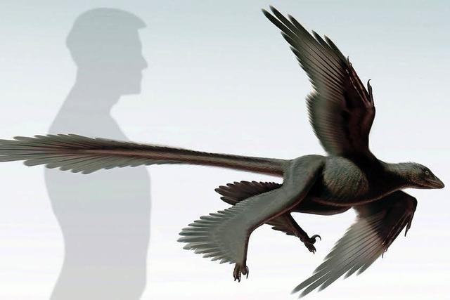 Forscher entdecken vierflügligen Saurier