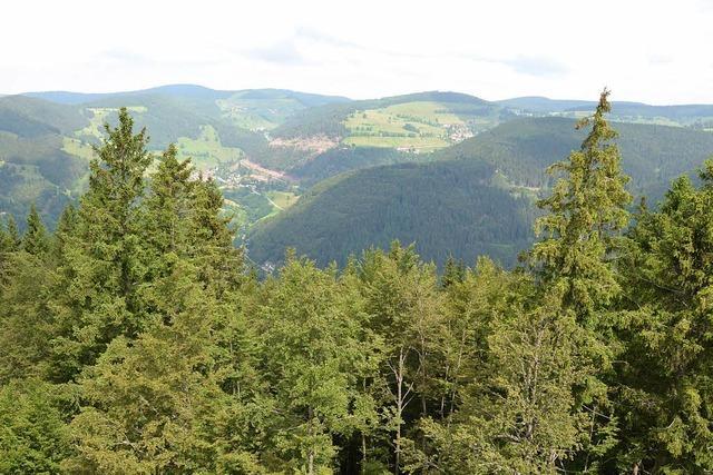 Der Turmsteig: Schwarzwaldblicke wie aus dem Bilderbuch