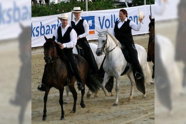 Die Vielfalt der Pferdewelt