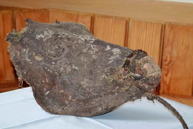 Mumifizierter Kalbskopf auf dem Dachboden – was hat es damit auf sich?