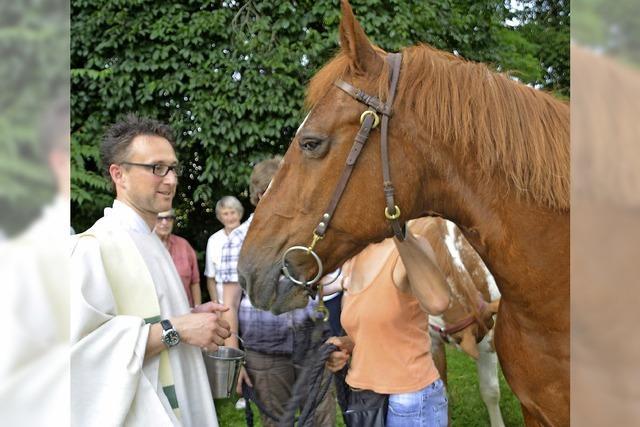 Auch zwei Pferde kommen zur Segnung
