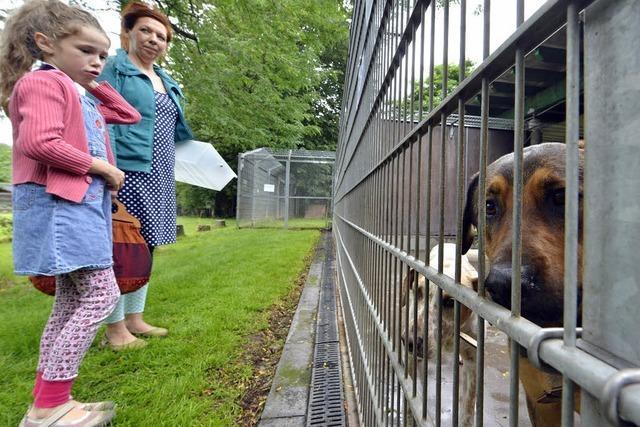 Sommerfest im Tierheim: Einnahmen fließen in Renovierungen