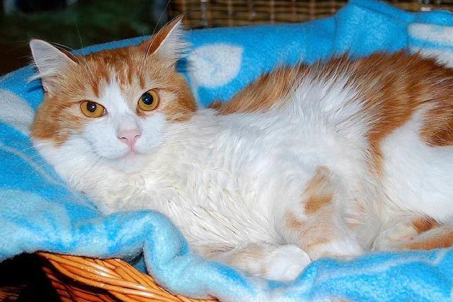 Angeschossene Katze, vergiftete Ziegen – Racheakte wegen Radarkontrolle?