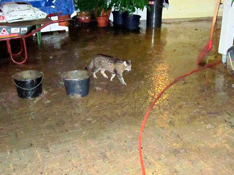 Auch in Schwörstadt holen sich Katzen nasse Pfoten.  | Foto: Helmut Kohler