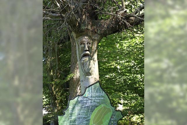 Natur erobert den Wald zurück
