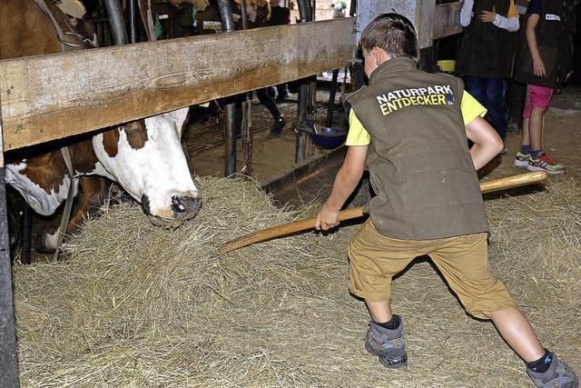 Wie viel Gras die Kuh frisst