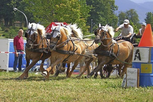 Vereinsfest des Fahr- und Reitvereins St. Peter